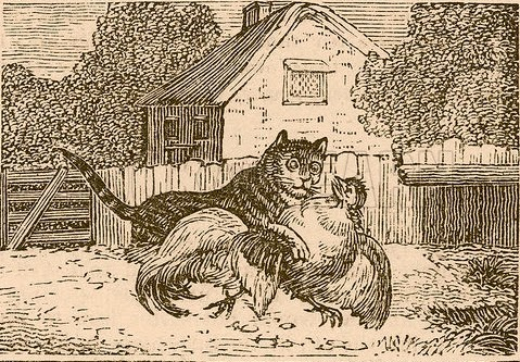 The Cat And The Cock Fables Story