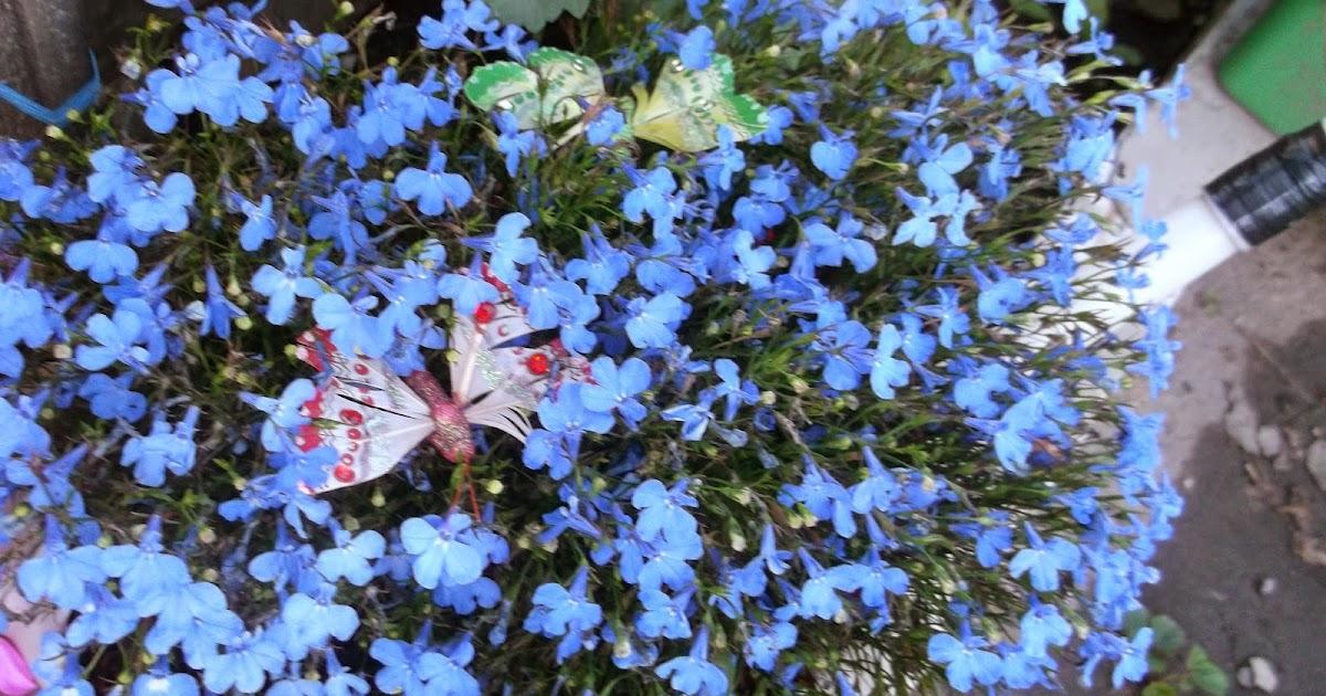 В подарок цветы для невесты 97