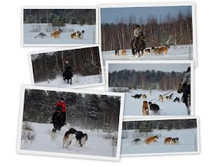 Конные прогулки с собаками по берегу Волги