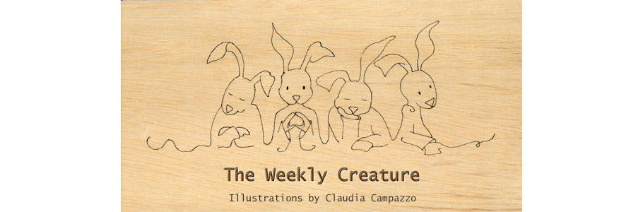 The Weekly Creature