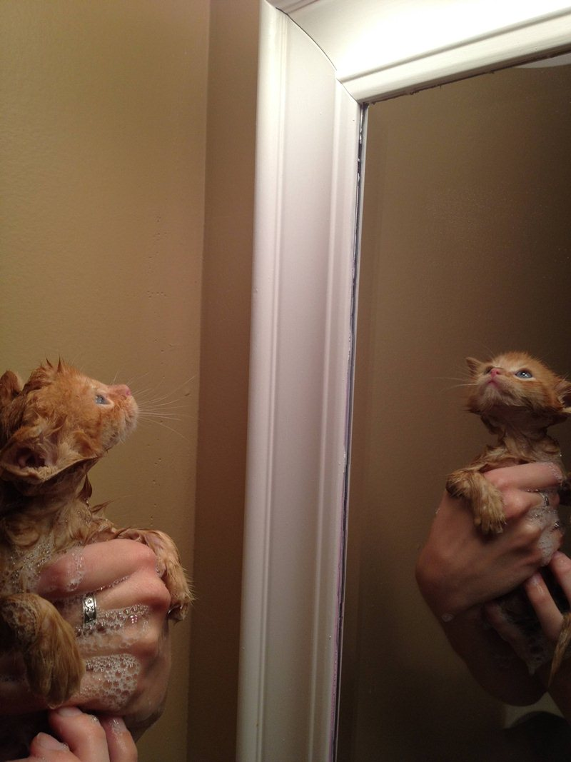 funny cat pictures, kitten gets bath