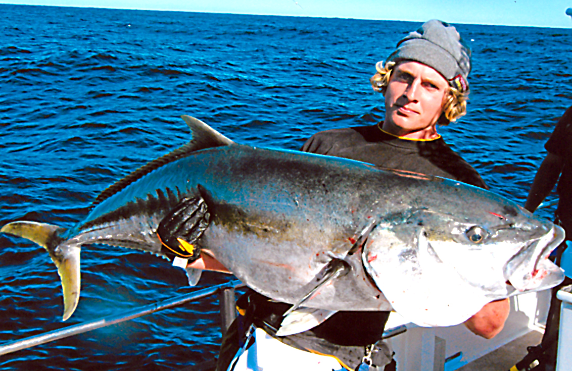 Big fishes of the world yellowtail southern seriola lalandi for What is the biggest fish ever caught