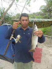 Ikan Tamok