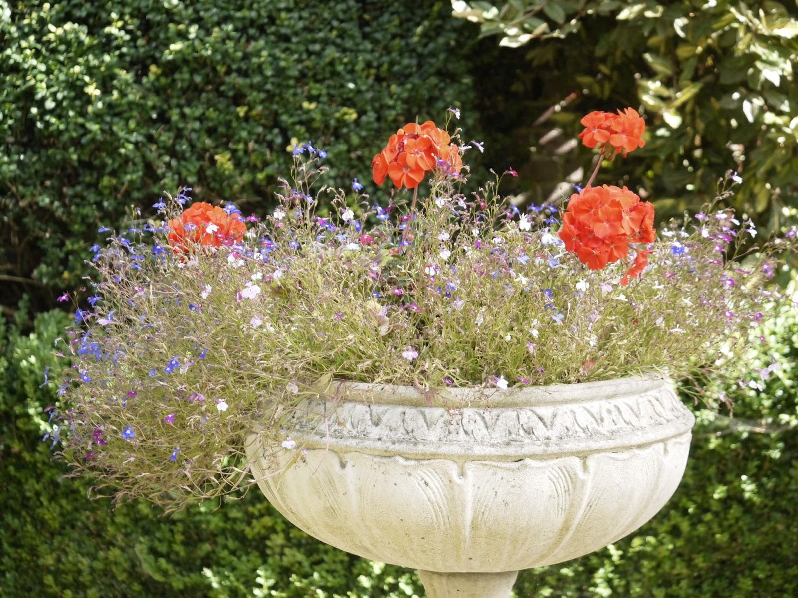 pot fleurs Poole