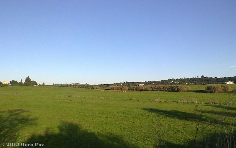 Pera grazing field - Algarve