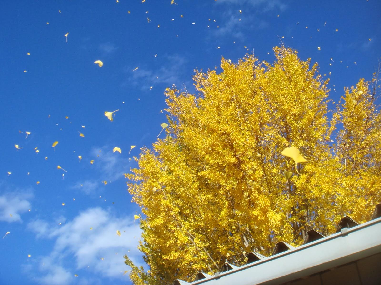 すべての折り紙 折り紙 ます : 澄み切った青空を背景に風に ...
