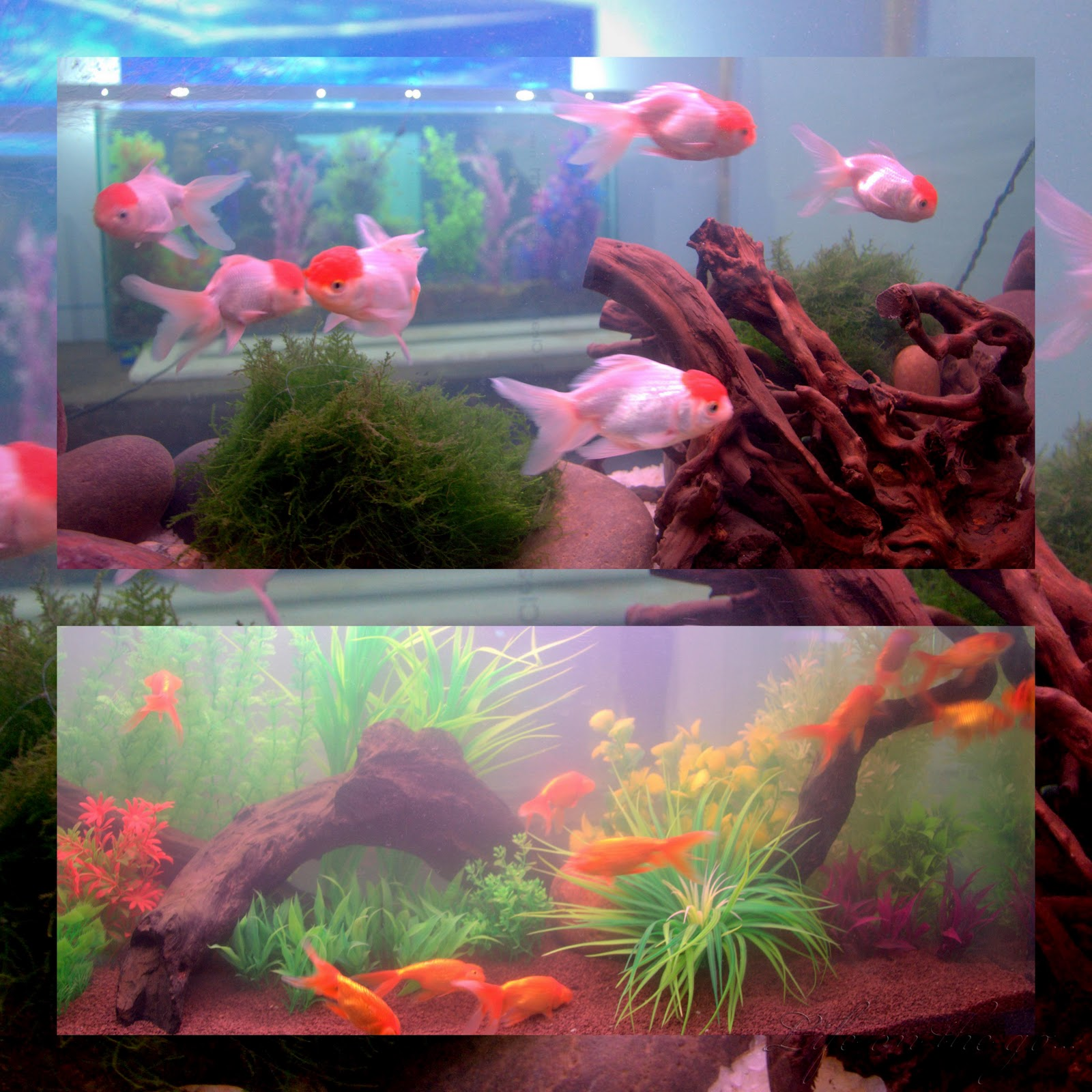 Fish aquarium jabalpur - Read More