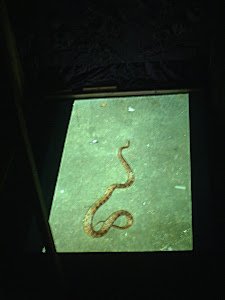 Snake in the Crypt