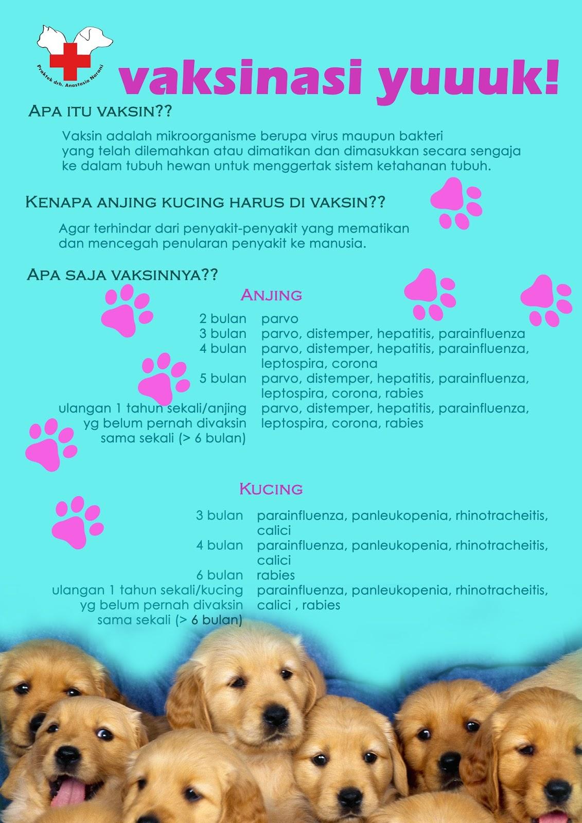 Klinik Hewan Bogor Drh Anastasia Narani Vaksinasi Anjing