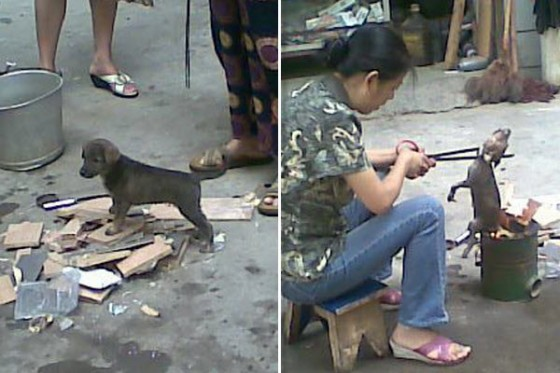 woman in China roasting a puppy alive in a makeshift stove. | Photos ...