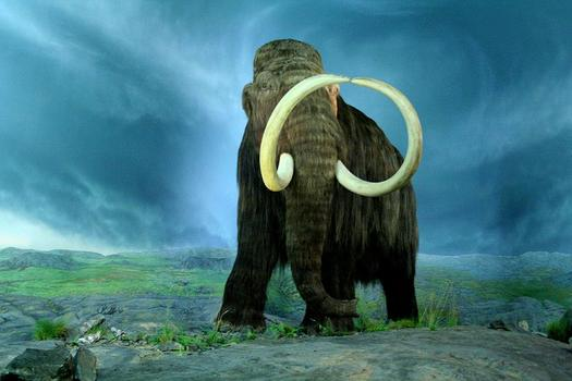 File Woolly mammoth Mammuthus