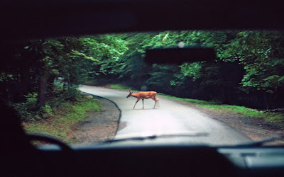 Your Chance of Hitting a Deer in Michigan