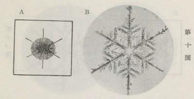 『雪華図説』の研究 模写図と顕微鏡写真と比較 第十図