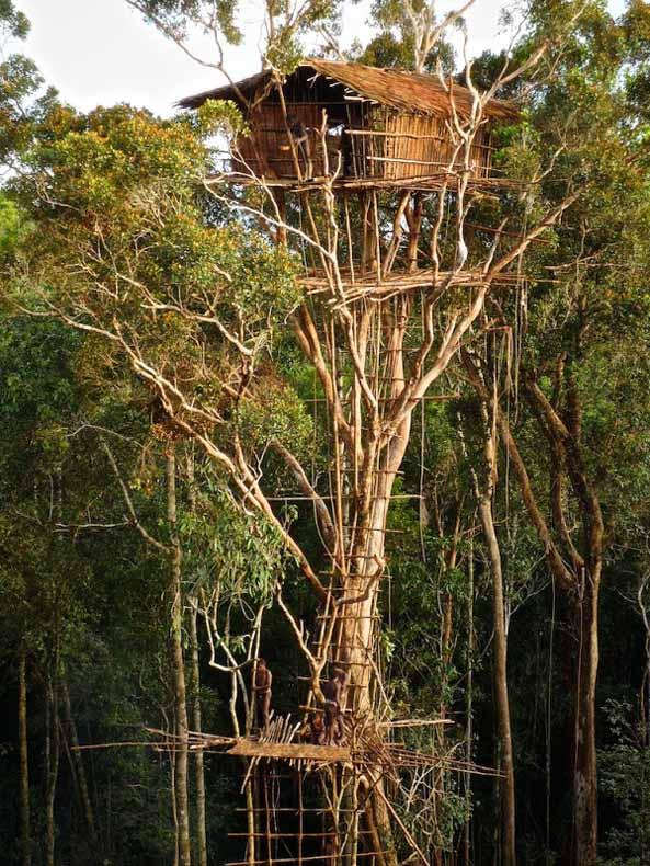 Las Casas En Los Arboles De La Tribu Korowai De Nueva Guinea Ruta 33 - Casas-en-los-arboles