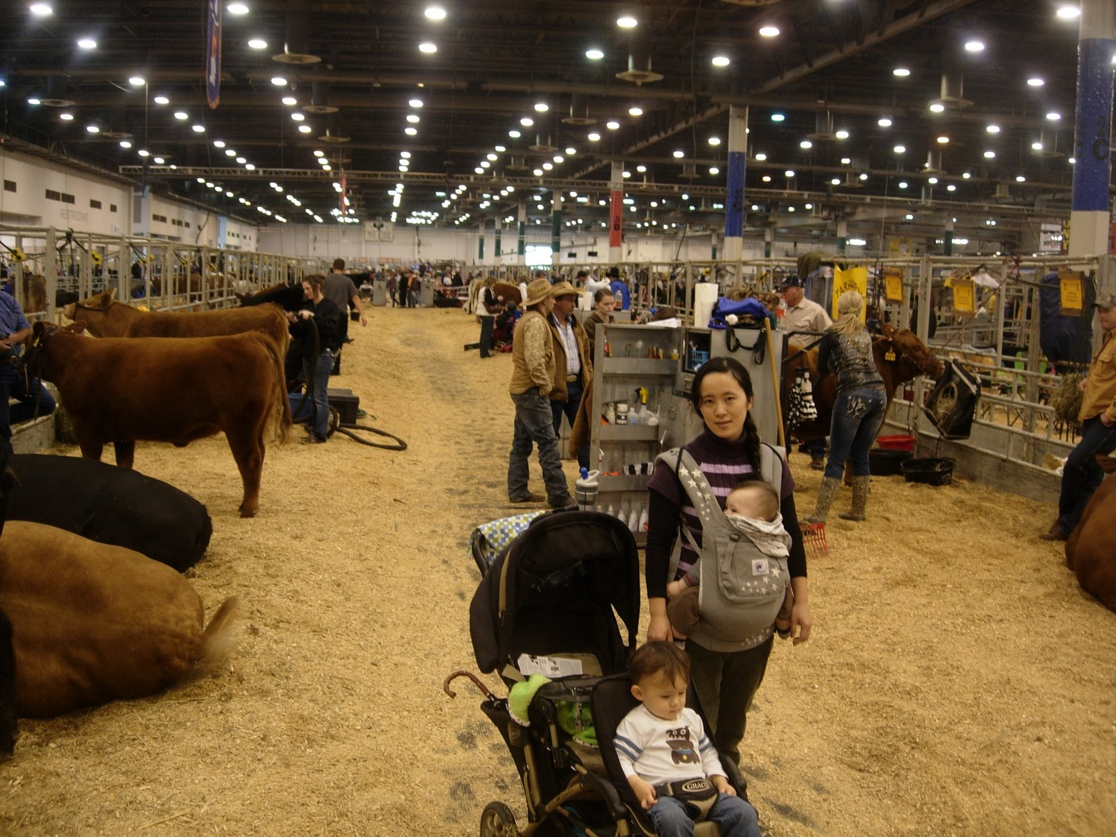 2014 Houston Livestock Show And Rodeo Rodeo Houston