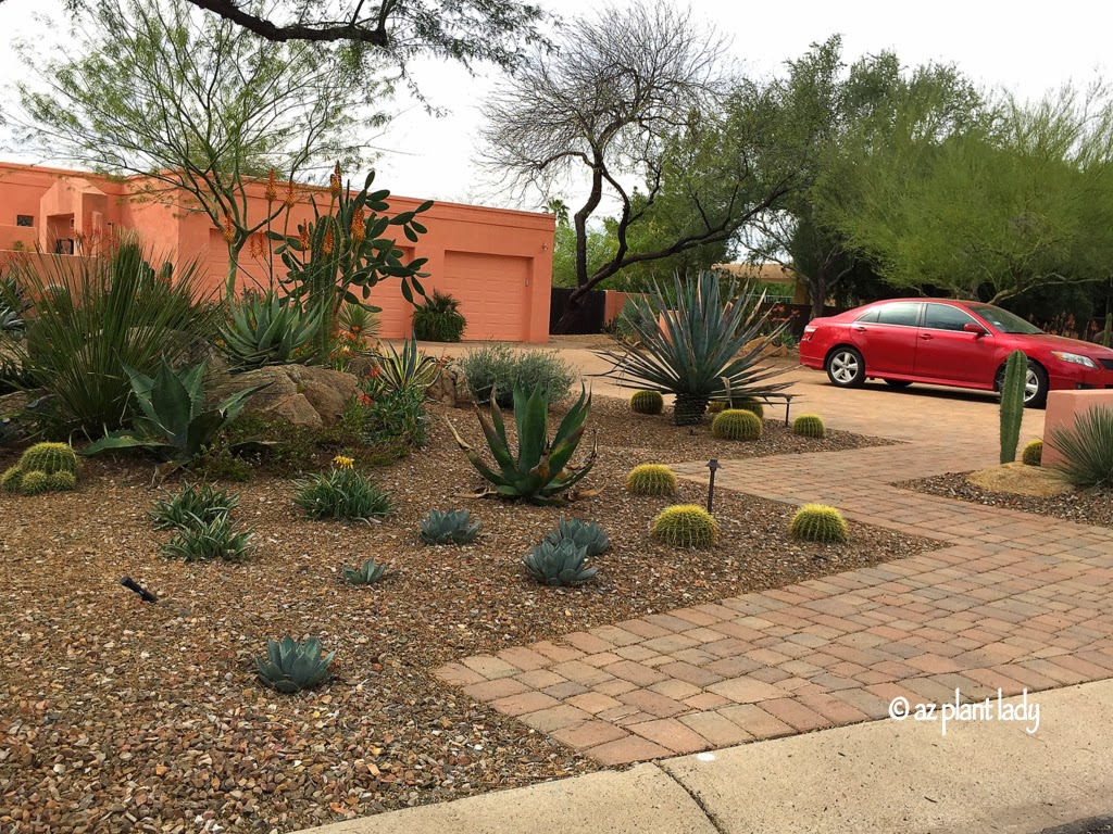 Ramblings from a desert garden great landscape design for Drought resistant landscaping