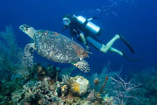 scuba diving in Bali, PADI diving school, NAUI certificate, diving in Bali