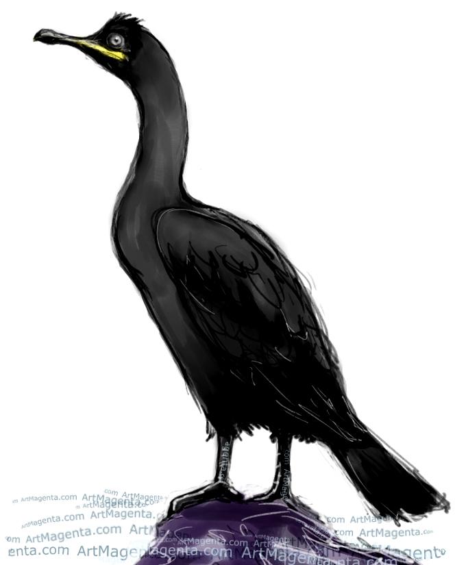En fågelmålning av en skarv från Artmagentas svenska galleri om fåglar