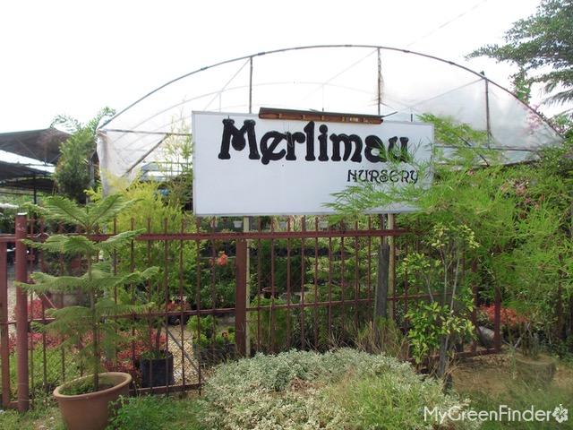 D Merlimau Nursery