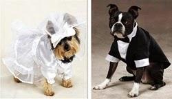 Cães vestidos para casamento
