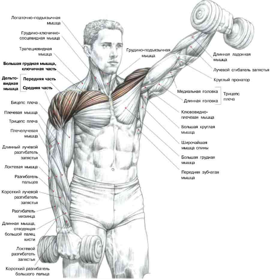 Мышцы груди упражнения 14 фотография