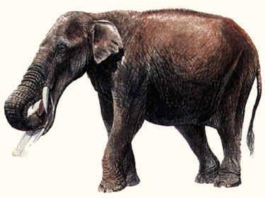 elefantes extintos Amebelodon