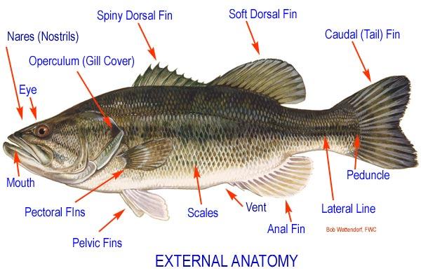 Aqua Fanatic: Fish Anatomy