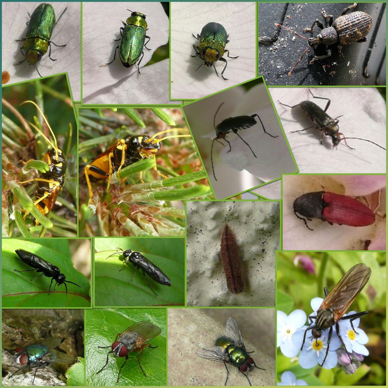 Coquelicots coquillages et belles pages qui sont - Insecte vert volant ...