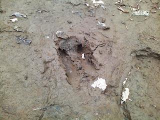 シカの足跡