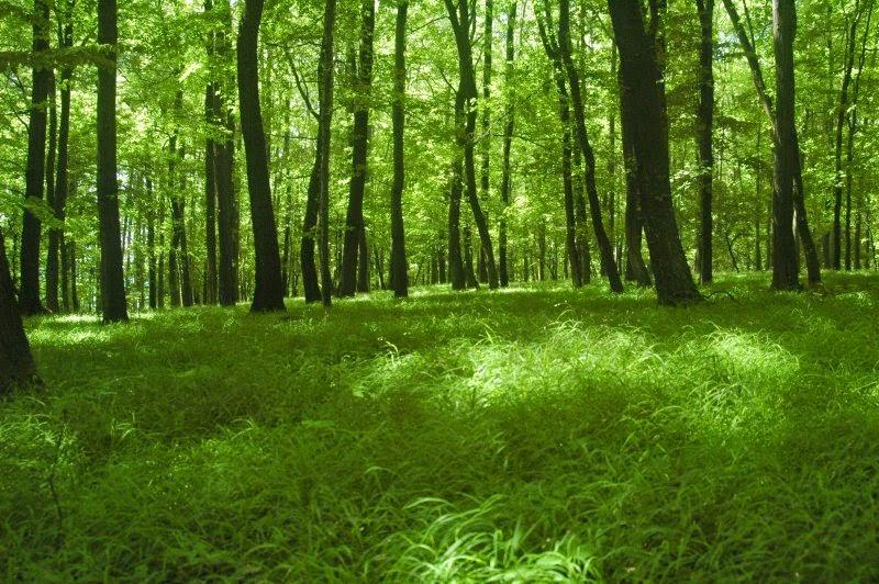 Nuestro bosques