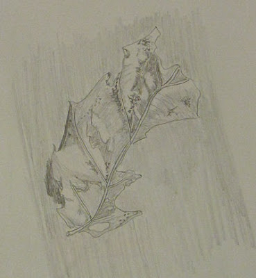 pencil drawing of a dead leaf