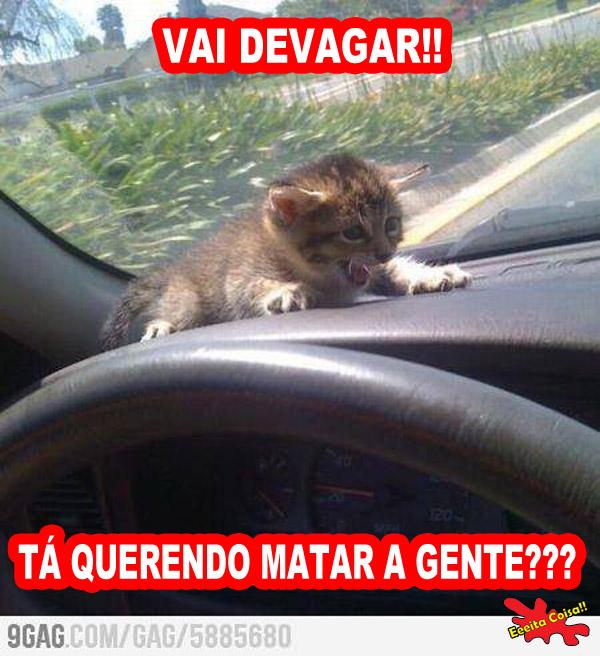 gato, carro, transito, vai devagar, eeeita coisa