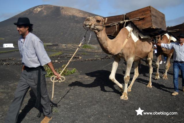 Lanzarote_vinos_entre_volcanes_ObeBlog_04