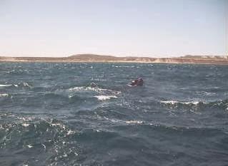 Video Ballena Franca Austral y su ballenato - Península Valdes