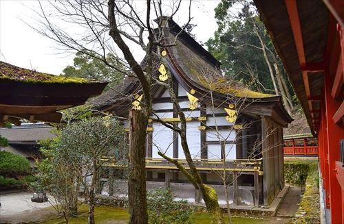 京都市西京区|松尾大社 山吹まつり