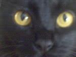 ORFAGATO - meu amor é um gato