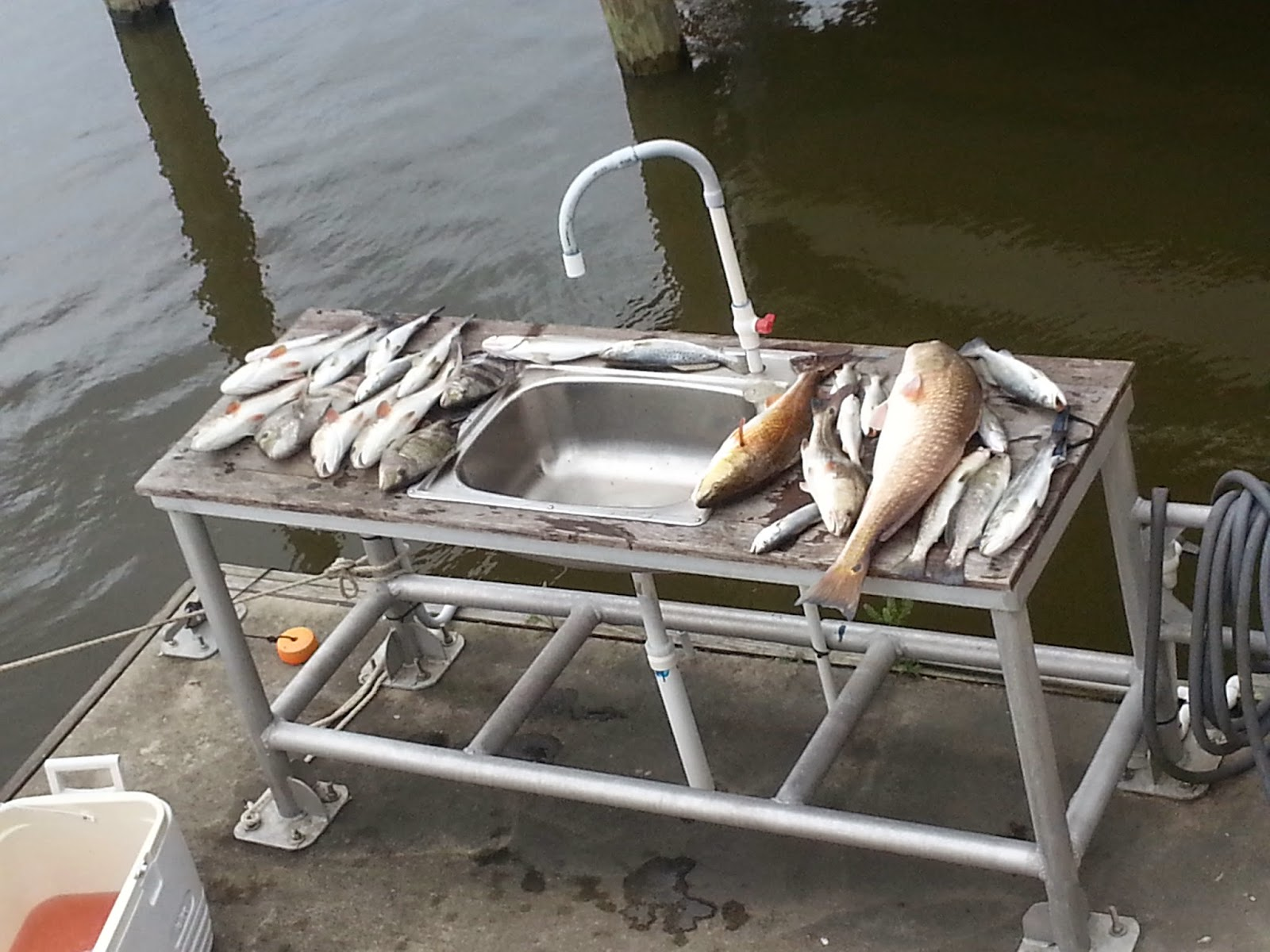 Redfish, Speckled Trout, Sheepshead