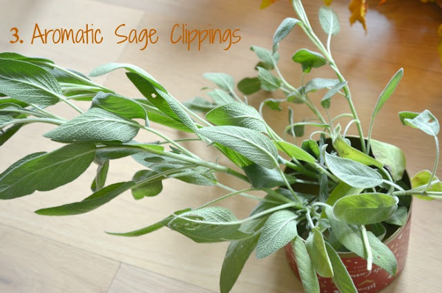 Fresh sage herb clippings
