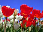 #1 Delightful Flowers Art