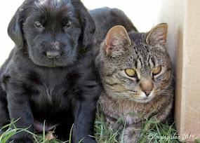 Rain Puppy & Blomquist ♥