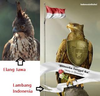 Burung Garuda