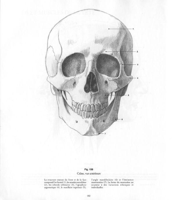 Comparative pdf human animal anatomy anatomy drawing school