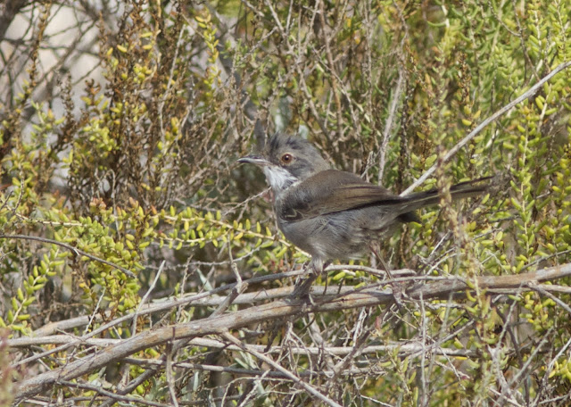 Spain, Costa Blanca, Birding, Birding