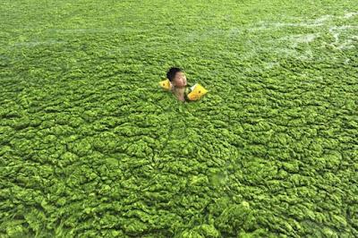 Web informazione cina il mare diventa verde - Bagno davide gatteo mare ...