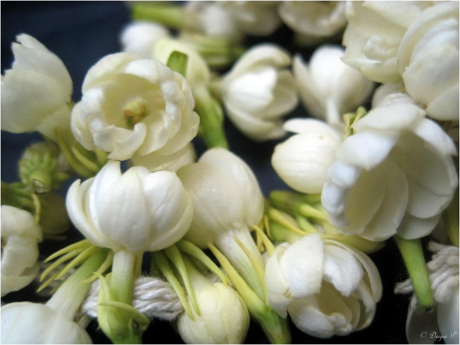 A to Z Challenge - J- Jasminum sambac flower (Indian