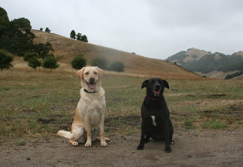 cabana and black mixed breed dog bucky in sits, mouths open in big smiles, with rolling hills behind them, the grass is almost all dried out and brown, and there's a big whitish smudge next to cabana's head
