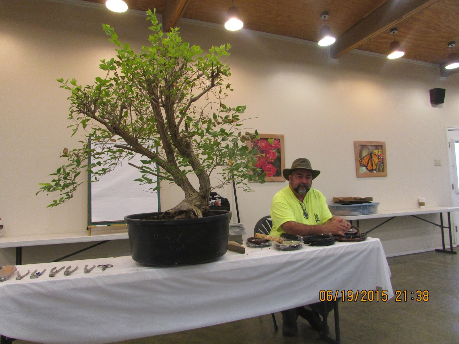 Charmant Bent Tree Bonsai