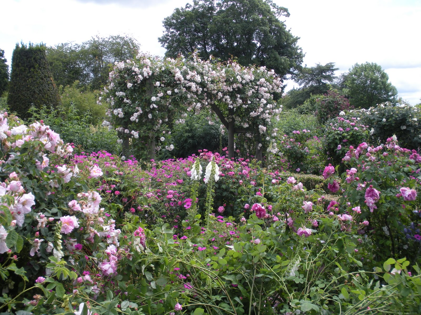 Backyard rose garden - The Rose Gardens At Mottisfont Abbey