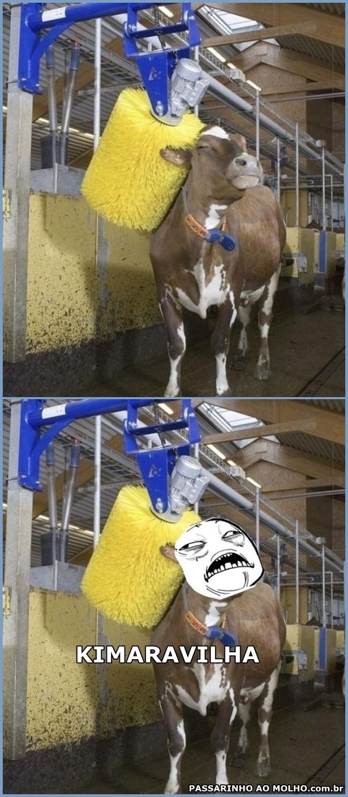lavando a vaca
