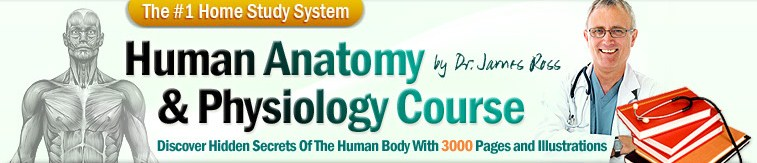 online anatomy course With alison's free, online certificate and diploma-level courses, you can study the anatomy (features) and physiology (functions) of the human body.